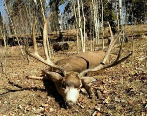 Mule Deer Trophy Hunts