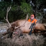 cow elk, bulls and bucks
