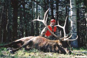 Alpine meadows trophy elk hunt in Colorado